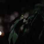 ホタル/弁天ふれあいの森公園